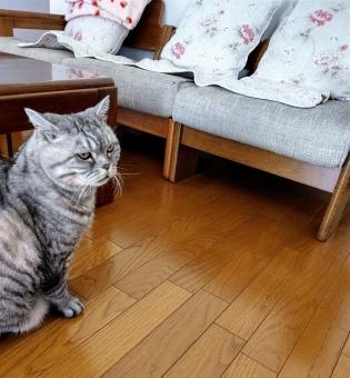 椅子 部屋 ソファー 家族 家 ペット 動物 猫 家具 子猫 トラネコ 家庭的 屋内で