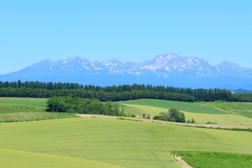 美瑛の丘 夏 大雪山系 美瑛 富良野 北海道 パッチワーク 風景 景色 背景 晴天 快晴 お天気 雲一つない青空 快適 爽快 さわやか 爽やか 青 緑色 風 暑さ 暑い 涼しい 涼しげ 遠くの山並み 雄大 広大 広い 観光地