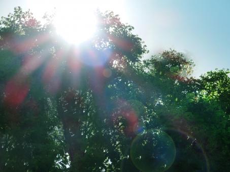 強い日差し 日差し 日光 光 熱中症 夏 真夏 初夏 暑い 快晴 レジャー 屋外 太陽の光 直射日光 強い光 自然 植物 熱射病