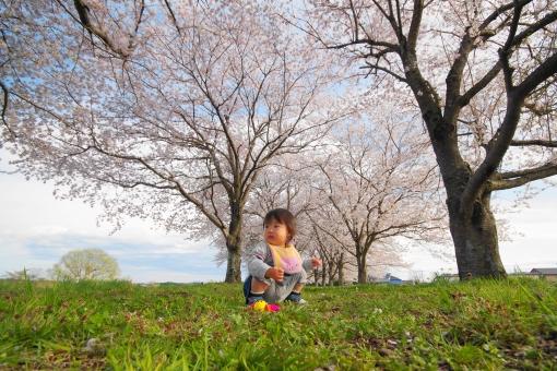 桜の下での写真
