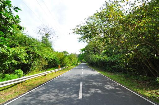 自然 植物 草 木 樹木 葉 葉っぱ 緑 枝 幹 空 雲 天気 電線 ガードレール 道路 コンクリート 白線 地面 土 鬱蒼 成長 育つ 伸びる 生える 林 森 森林 風景 景色 景観 野生 フィリピン 外国 熱帯 南国 東南アジア 島国 木漏れ日 影 陽射し