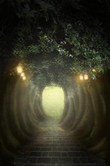 不思議の森の写真