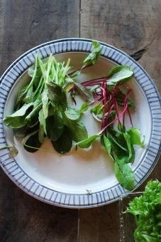 グリーンサラダ サラダ さらだ 野菜 ドレッシング やさい ベビーリーフ ルッコラ リーフレタス レタス lettuce salad homemade 料理 調理