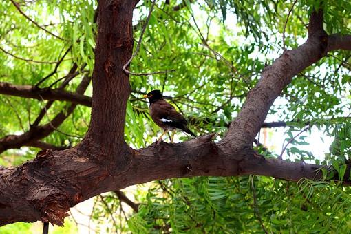鳥 とり トリ 鳥類 動物 生き物 野生 野鳥 葉 葉っぱ 枝 緑 木 木の葉 自然 植物 屋外  光 青空 環境 木漏れ日 こもれび さわやか 爽やか  森