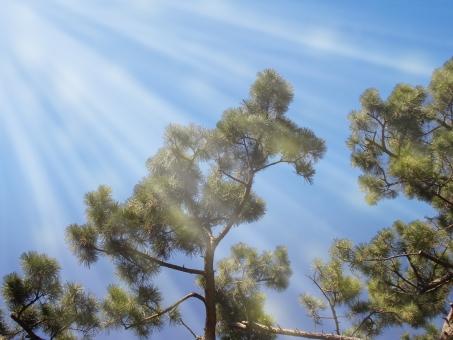 木と空 木と太陽 自然 植物 木 樹木 葉 葉っぱ 緑 幹 枝 成長 育つ 伸びる 野生 野草 林 森 森林 山奥 鬱蒼 密集 集まる 多い 沢山 空 太陽 太陽光 光 陽射し 木漏れ日 逆光 眩しい 影 無人 室外 屋外 風景 景色 幻想的 テクスチャ テクスチャー 太陽光線 紫外線 ロコ 大自然