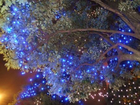 イルミネーション 電飾 illumination 青 電球 光源 夜 クリスマス 発光ダイオード LED 木 樹木 冬 灯り