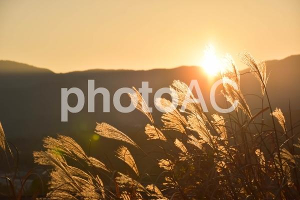秋の夕暮れとススキの穂の写真