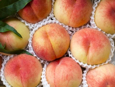 果物 フルーツ 夏 贈答品 桃