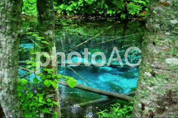 神の子池の写真