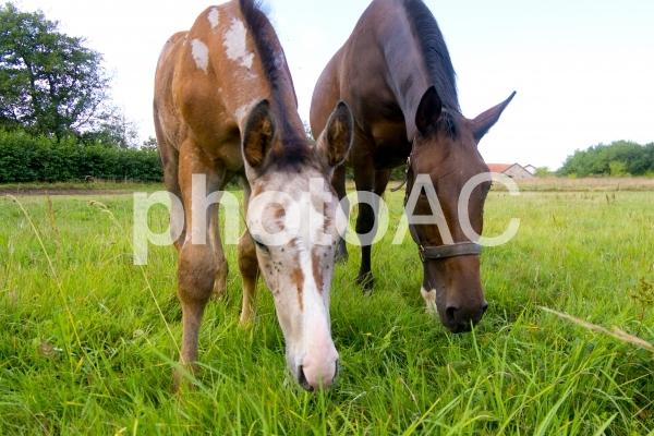 子馬と母馬の写真