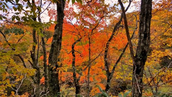 北海道の紅葉36の写真