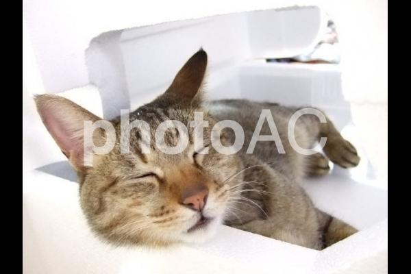 快適空間で寝る猫の写真