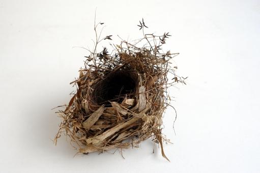 鳥の巣 巣 小鳥の巣 丸い テクスチャ ネイチャー 茎 木の枝 巣穴 からっぽ 空っぽ 一個 乾燥 巣作り 小枝 一つ 円形 茶色 質感 野鳥 小鳥 植物 鳥 木 葉 円 笹 枝 穴 小さい 産卵 丸 わら