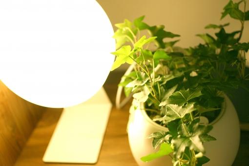 インテリア 部屋 室内 住宅 観葉植物 アイビー ヘデラ 植物 葉 ランプ ライト 電球 電気 明かり 灯り 照明 照明器具 グリーン 緑 間接照明 led ledライト led電球 白熱球 白熱電球 鉢 水やり 風水 飾り 癒し