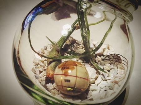 エアプランツ おしゃれ お洒落 地球 小物 植物 インテリア テラリウム 綺麗 きれい 瓶 空き瓶 リサイクル 100均 趣味 雑貨 栽培 育てる 緑 白 透明 ビン 再利用 エアープランツ 地球儀 アンティーク 青 茶色 リユース