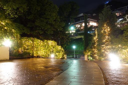 神戸 夜 夜景 ライトアップ ライト 街灯 光 明かり 街路樹 木 植物 自然 建物 建築物 観光 観光地 旅行 景観 無人 道 歩道 石畳