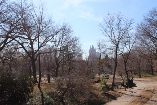 ニューヨーク セントラルパーク 公園 冬 自然 アメリカ 木 植物