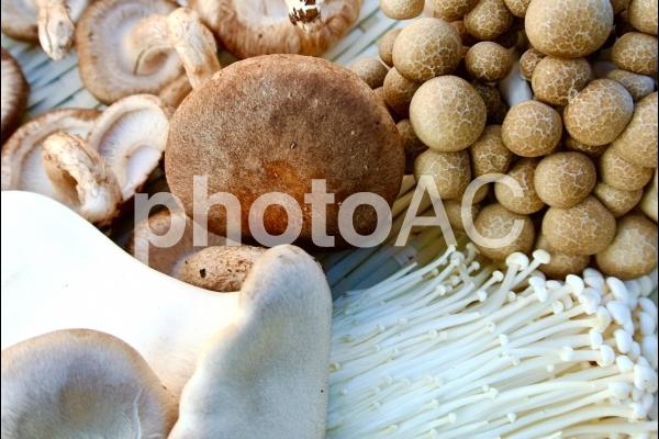 キノコ 椎茸 シメジ エノキ エリンギの写真