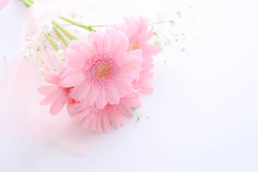 ガーベラの花束の写真