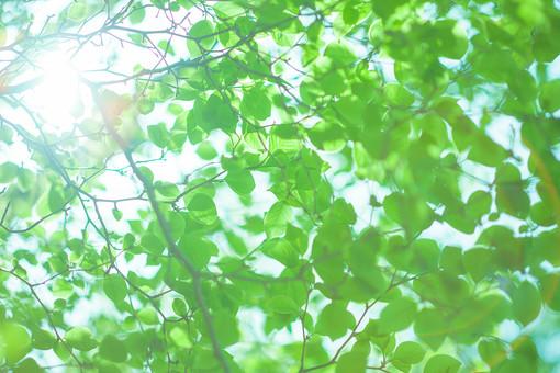 自然 植物 葉 葉っぱ 緑 空 太陽 太陽光 光 陽射し 木漏れ日 眩しい 枝 木 樹木 加工 成長 育つ 伸びる アップ 新緑 鮮やか コントラスト 無人 室外 屋外 風景 景色 多い 密集 集まる 沢山 重なる ローアングル 見上げる