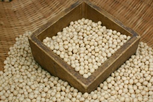 食べ物 食材 食物 植物 大豆 豆 蛋白質 たんぱく質 健康 栄養 イソフラボン 美容 ダイエット 食品 ヘルシー 豆腐 味噌 納豆
