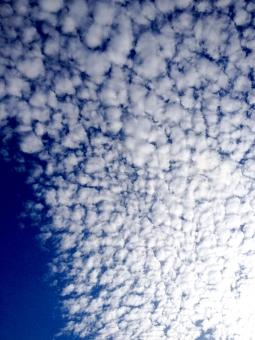 白い雲 白 white cloud 青空 あお  そら あおぞら 青 空 blue sky Blue Sky 鱗 うろこ雲 綿 わた わた雲 cotton コットン ハンモック 拡がっている つながり 光 影