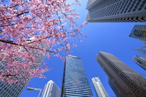 東京 東京都 新宿 日本 高層ビル ビル群 ビル街 オフィス街 オフィス ビジネス街 桜 花 花びら 植物 ピンク 青空 青 都市 都会 首都