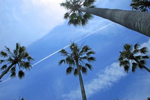 神奈川県 逗子市 マリーナ 空 ヤシ 飛行機雲 南国 風景
