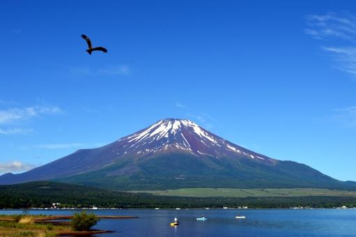 山中湖 富士山 富士五湖 世界遺産 夢 鷹 とんび 鳥 山 春 青い空 青空 青 5月 飛ぶ 湖 湖畔 湖岸 岸辺 初夢 年賀状 年賀 一富士 二鷹 希望