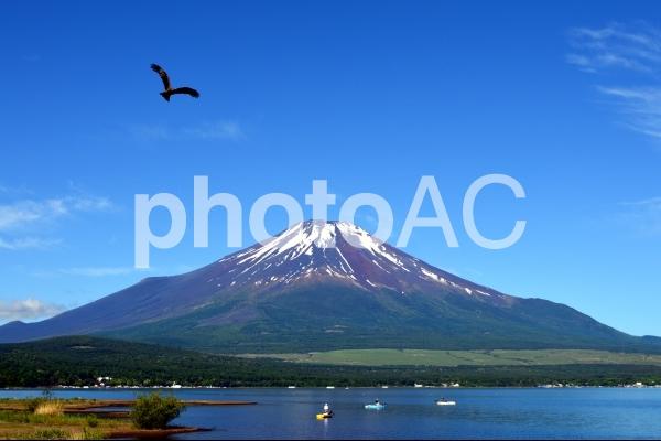 一富士二鷹の写真