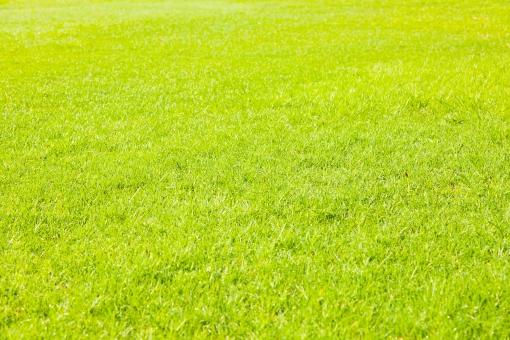 芝生 テクスチャ 背景 緑 コート グランド ゴルフ テニス 競馬 芝刈り 青い 春 若草 地面 庭 ガーデン ガーデニング 夏 新緑 芝 黄緑 草 明るい 気持ちいい 寝転がる 大の字 寝そべる ピクニック 公園 パーク グリーン 植物 草原 コピースペース バックグラウンド 素材 自然 風景 景色 エコ 環境 eco