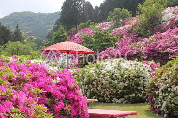つつじの庭園の写真