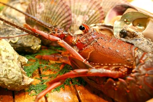 海老 えび エビ 伊勢えび 伊勢海老 魚 魚介類 海産物 生物 生き物 食べ物 食材 海の幸 甲殻類 伊勢 鳥羽 伊勢志摩