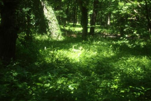 時間 木陰 緑 散歩道 ひだまり 日だまり スポットライト 森 森林 ハイキング ピクニック 涼しい 楽しい 秘密 休憩 呼吸 深呼吸 新緑 のんびり 木漏れ日 こもれび 熱中症 ゆっくり 若葉 青葉 バックグラウンド 爽やか 背景デザイン 自然 ナチュラル 幸せ 春 カード メッセージ 背景 壁紙 植物 初夏 5月 メッセージカード やわらかい 背景素材 素材