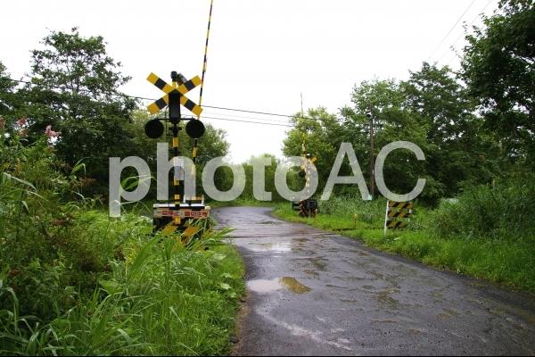 釧路湿原を通る釧網本線の写真