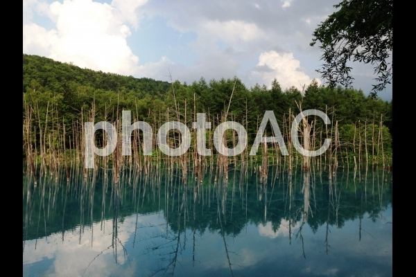 青い池2の写真