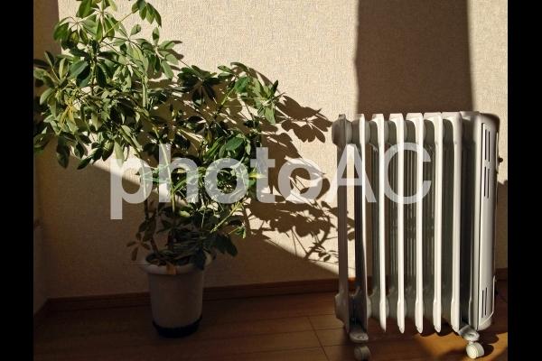 部屋の中の陽だまりの写真