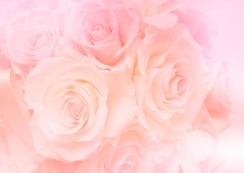薔薇 ばら バラ 淡い ピンク 背景 バックグラウンド 壁紙 テクスチャ エステ きれい 美しい 花 ウェディング ブーケ ブライダル 結婚 結婚式 飾り 装飾 デコレーション 美容 母の日 ホワイトデー バレンタインデー 誕生日 誕生日カード ポストカード ギフトカード メッセージカード