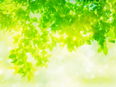 新緑木漏れ日イメージの抽象背景の写真