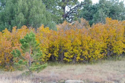黄色く紅葉した木77