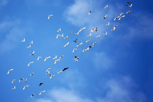 鳥の群れの写真