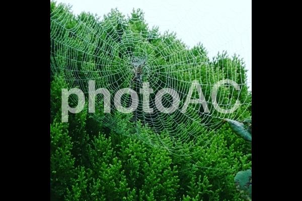 蜘蛛の巣の写真