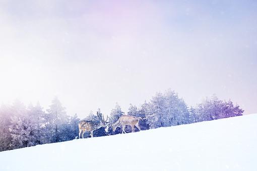 クリスマスの雪原と鹿の写真