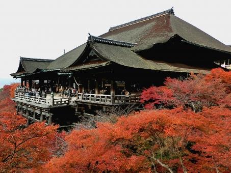 京都 清水寺 舞台 紅葉 秋 赤色 木 寺 temple autumn tree Kyoto Japan
