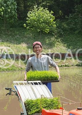 苗箱を持つ日本人3の写真