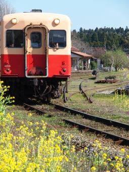 春!千葉の旅の写真