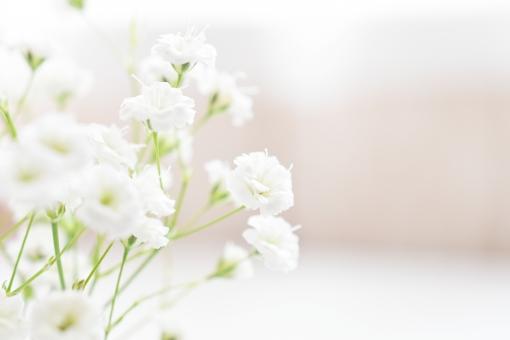 かすみ草の写真