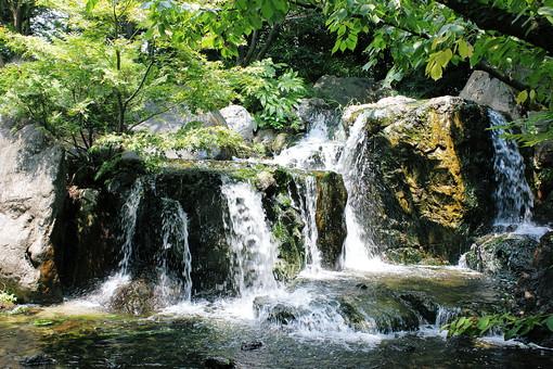 滝 小さい 水 植物 岩場 岩 もみじ 緑 夏