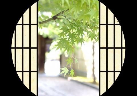 紅葉 季節 夏 障子 風情 涼しげ 涼しい 京都 夏らしい 暑い 暑中見舞い 風流 暑さ 和 日本 伝統 伝統的 建築 インテリア 装飾 扉 開ける 趣のある 趣味 和風 日本建築 風景 イメージ 気持ち良い おしゃれな