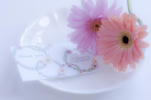 ガーベラ 花 ピンクの花 植物 淡い thank you thanks メッセージカード メッセージ 御礼 お礼 ふんわり 夢の中 夢 ガーリー 可愛い 女子 女子力 清楚 清らか そっと 気持ち やさしさ 優しい 優しさ 柔らかさ 柔らかい 柔和